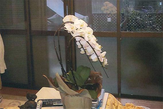サン・ウインド導入事例:ご両親への記念日のプレゼント胡蝶蘭